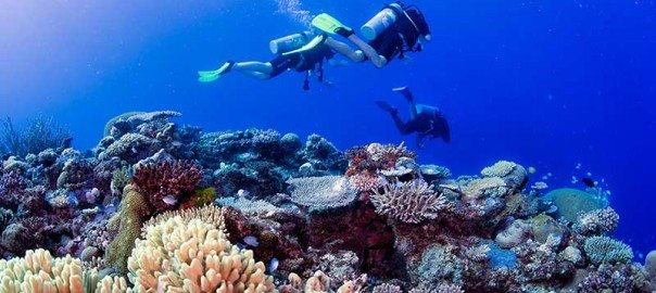 Fiji DIVE SPECIAL | MANTA DIVE