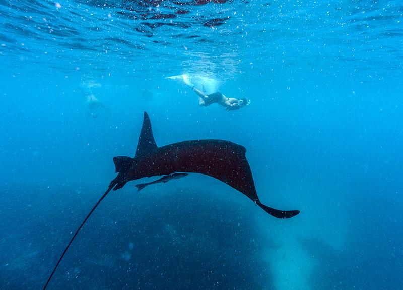 Swimming With Manta Rays In Fiji Mantaray Island Resort