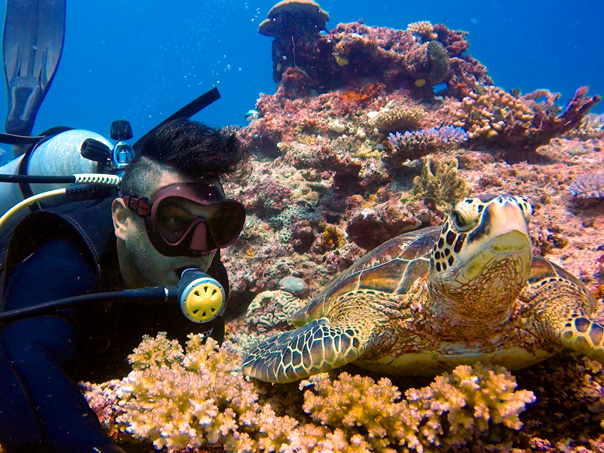 hawksbill-turtle-diving