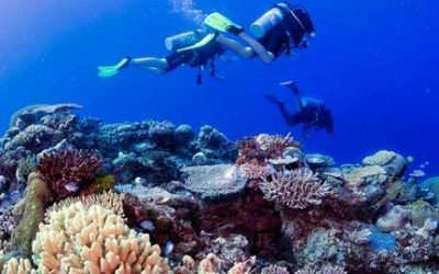 Best Time to Dive in Fiji