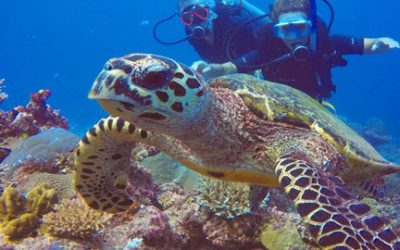 Turtles in Fiji