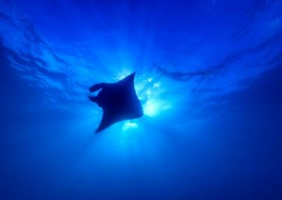 McLennan_MantaRay_18_0281_preview