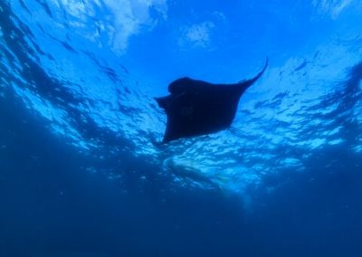 McLennan_MantaRay_18_0296_preview
