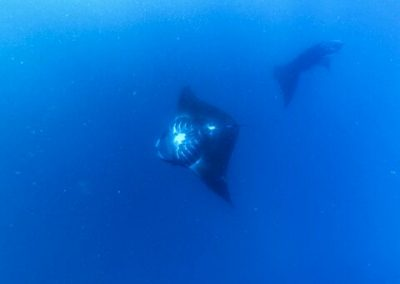McLennan_MantaRay_18_0313_preview