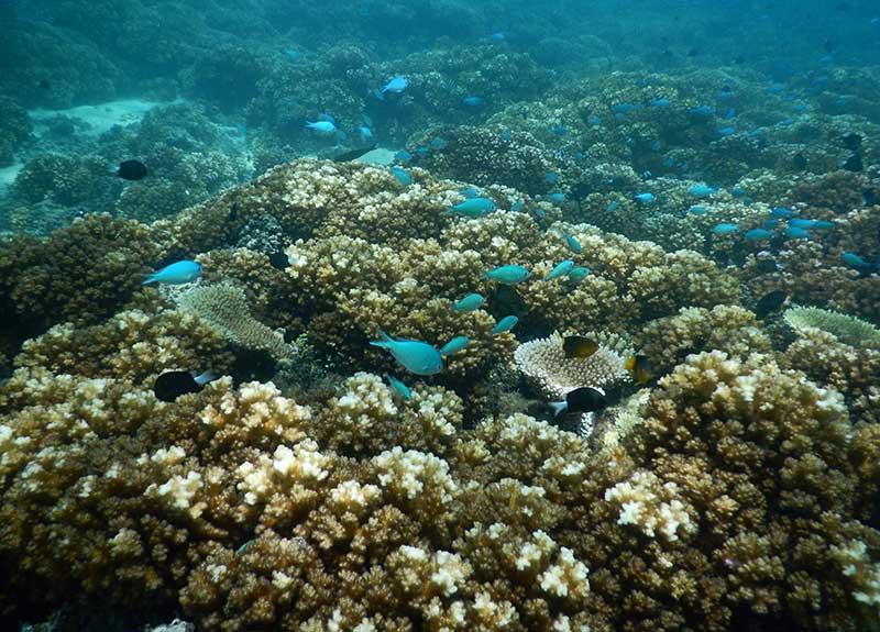 Fiji-Coral-Reef-800_575