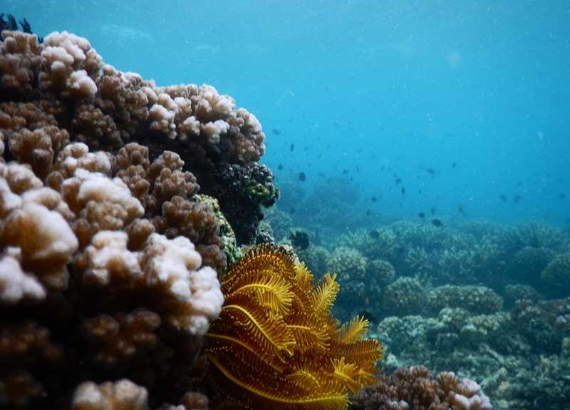 House-Reef-at-Mantaray-Island-Resort-800_575